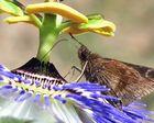 Nectar...!!!!!!
