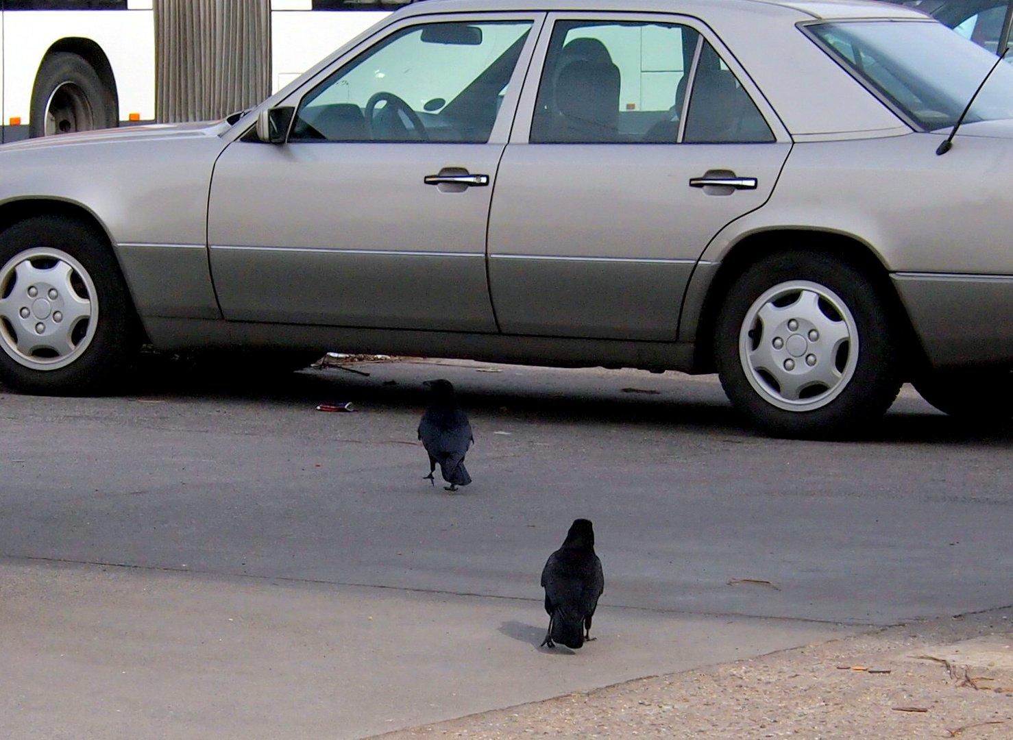 nee Du, laß das Auto stehen, wir fliegen heute ...