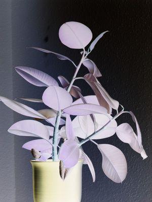 Negativ einer Zimmerpflanze