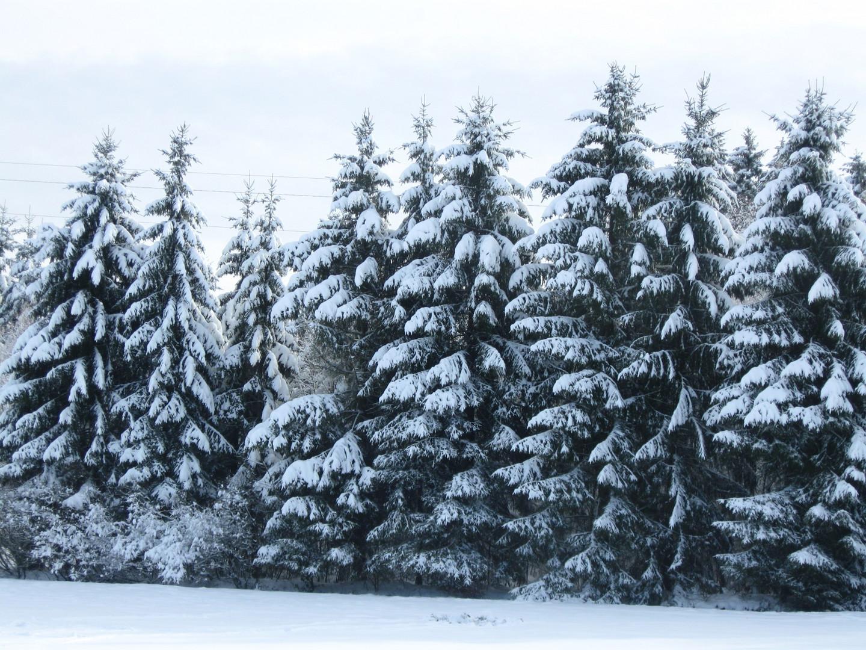 neige 2011