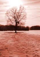 Neige à Lipsheim