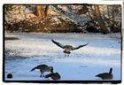 neige à roissy....atterrissage dangereux!