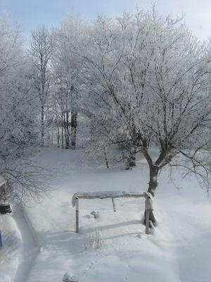 Neige collé aux branches