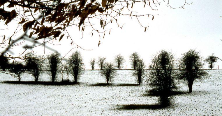 Neige dans la campagne normande