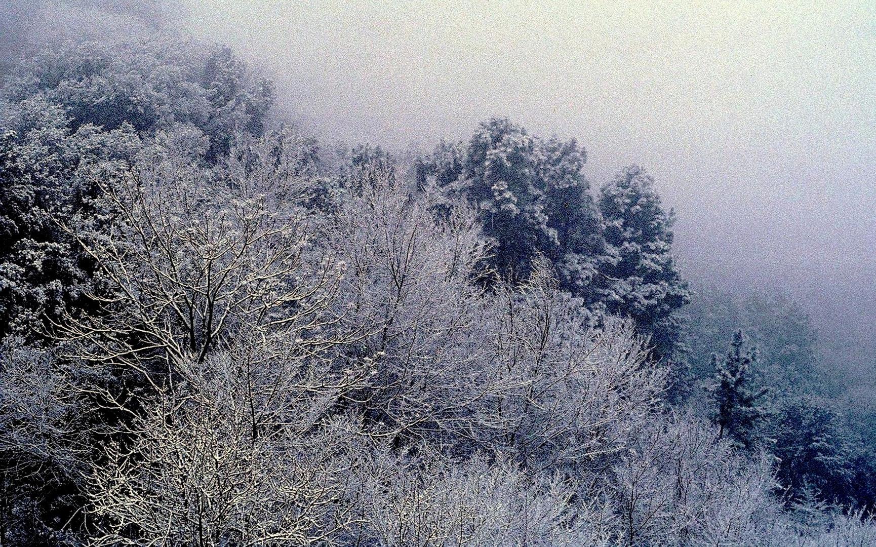 Neige en forêt normande