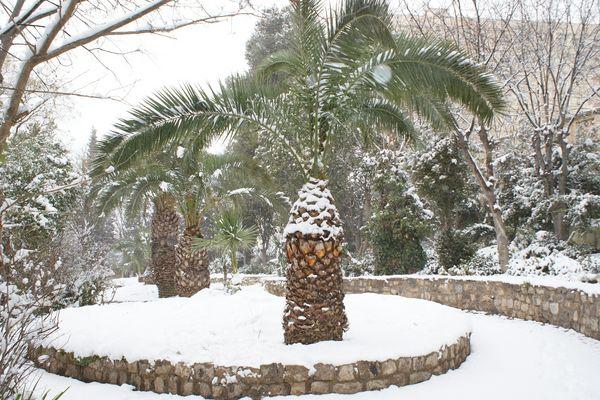 neige et palmier