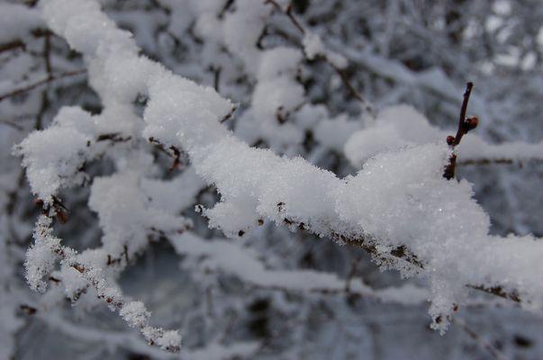 Neige sur fine branche d'arbre