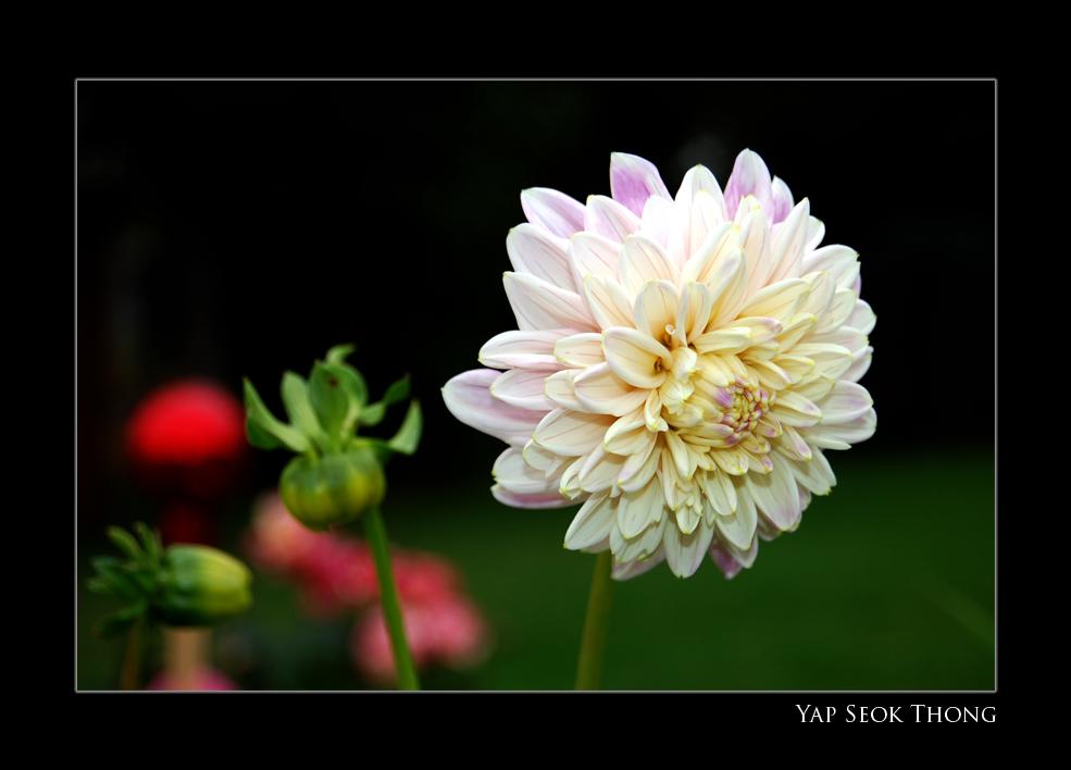 Neighbour's flower