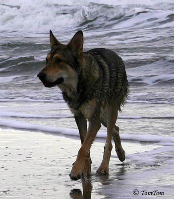 Nein, das ist kein Wolf