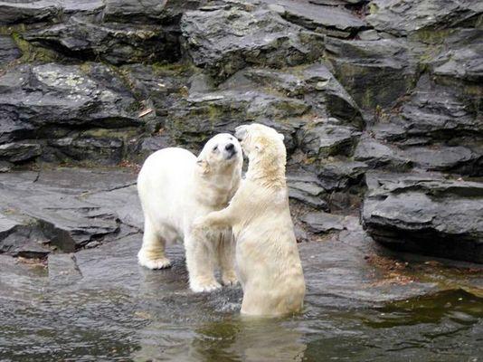 """""""Nein, heut gibt es keinen Kuss"""""""