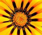 Nein keine Sonnenblume, aber Blume mit Sonne!
