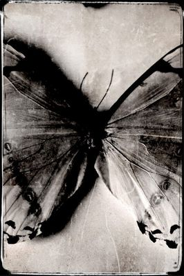 Nein, Schmetterlinge gehören nicht in einen Glaskasten! - Vol. II -