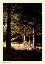 .....nel bosco....
