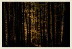 Nel bosco, la luce...