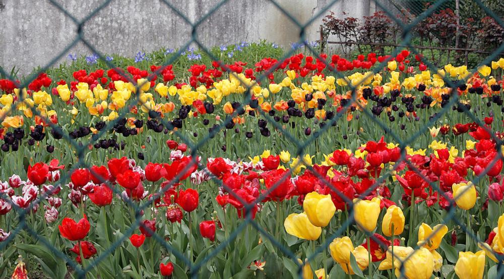 Nel giardino incantato....