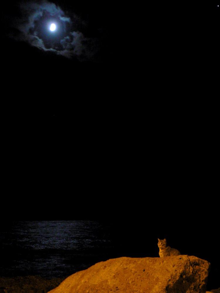 nel silenzio della notte