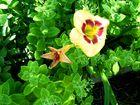 Nel verde...un fiore