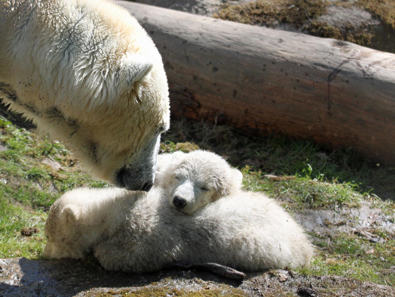 Nela und Nobby mit ihrer Mama