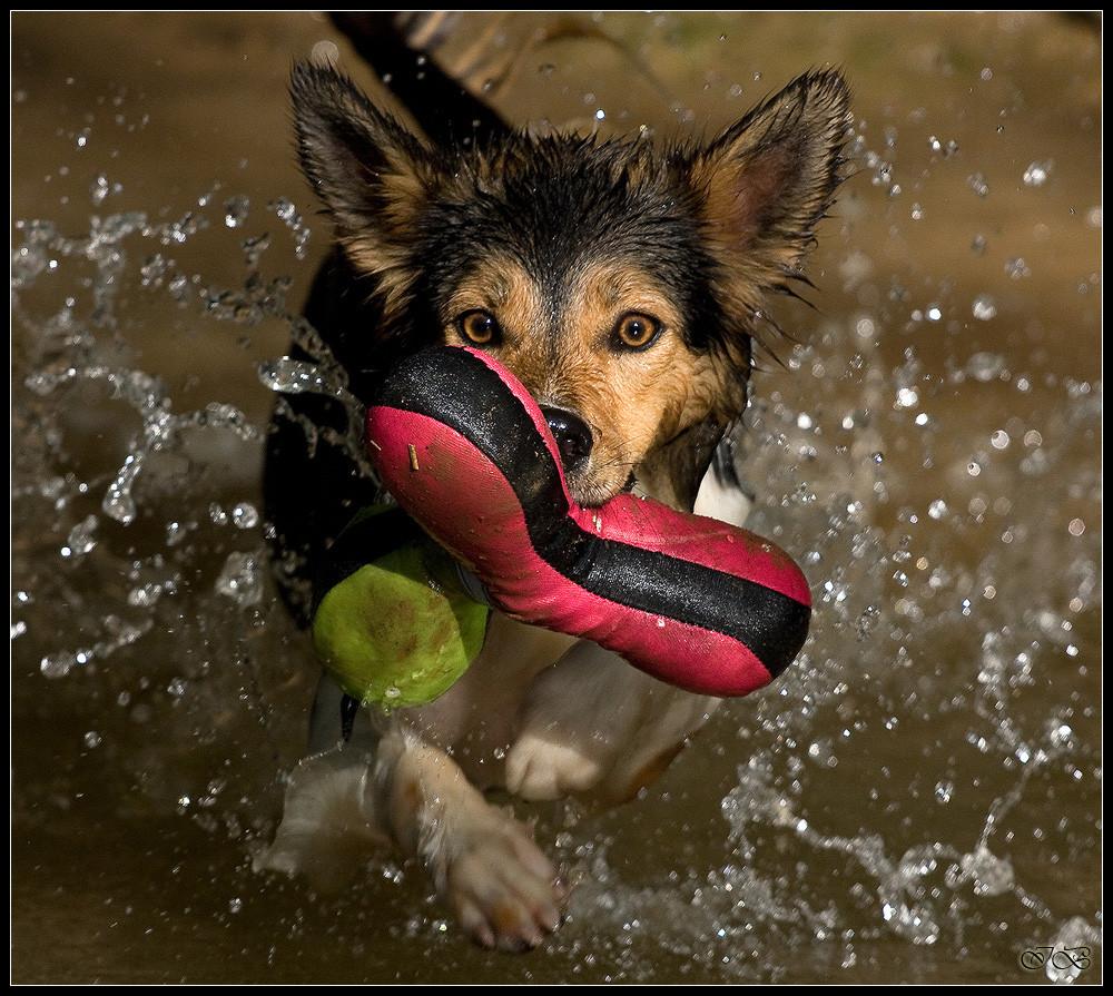 Nell macht ihren Freischwimmer