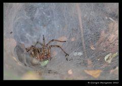 Nell'antro del ragno