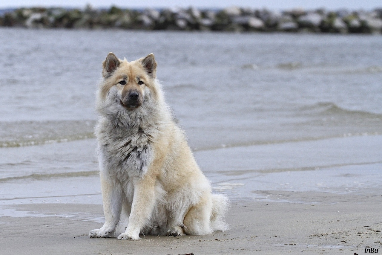 Nelly am Strand
