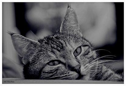 S/w Portraits von Haustieren