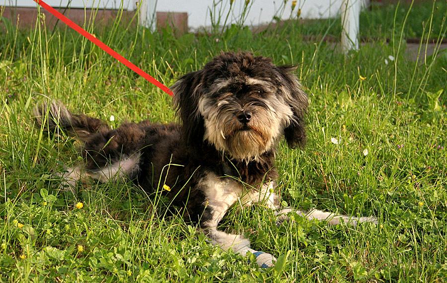 Nelly, weiblich, 7 Monate jung HAT ein neues Zuhause :-)))