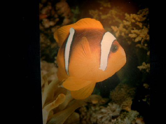 Nemo ;-)
