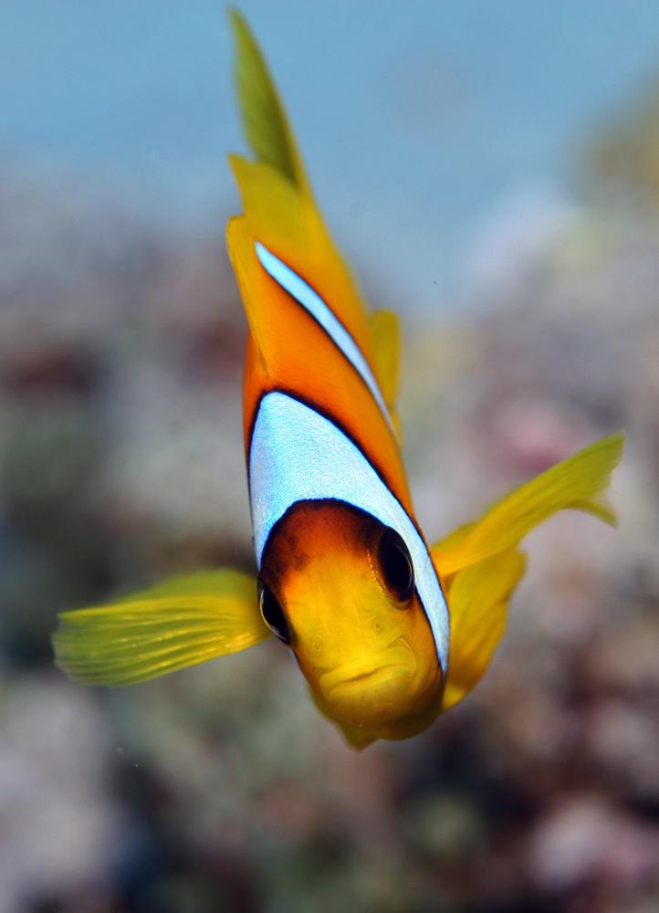 """""""Nemo"""""""