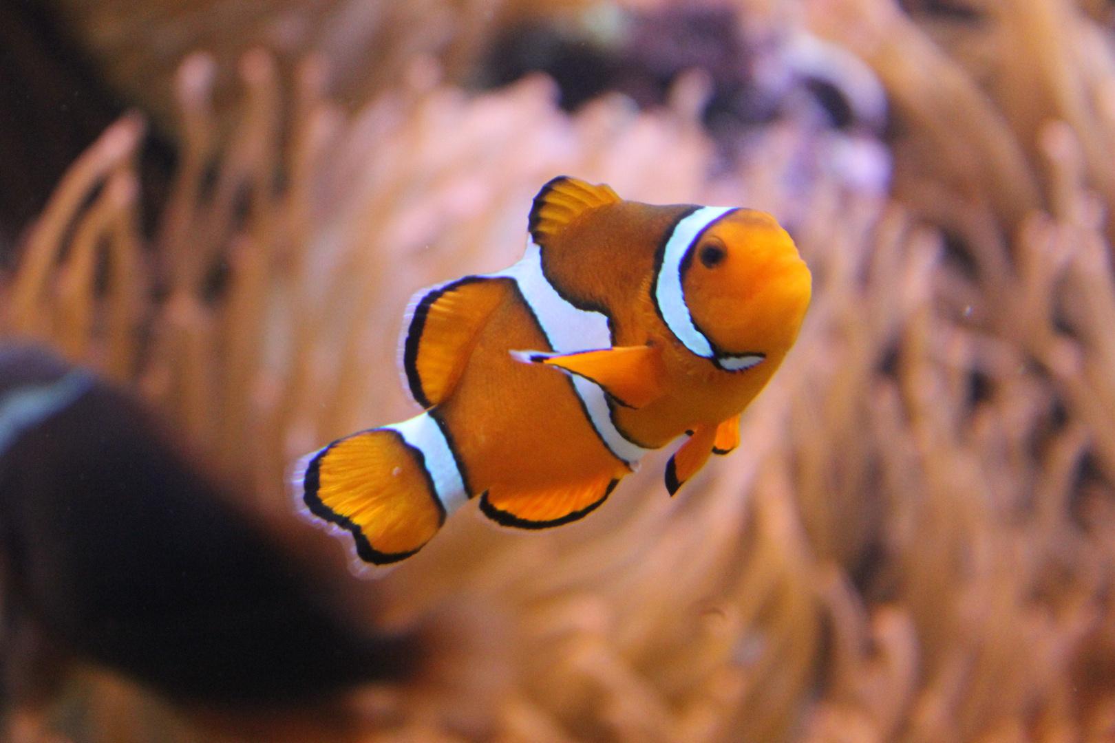 Nemo gefunden...