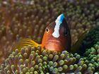 Nemo I