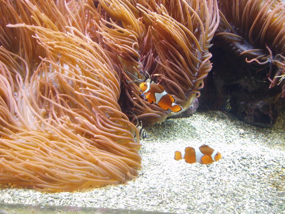 Nemo im Doppelpack