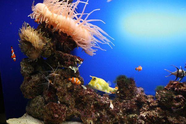 Nemo nud sein Freunde