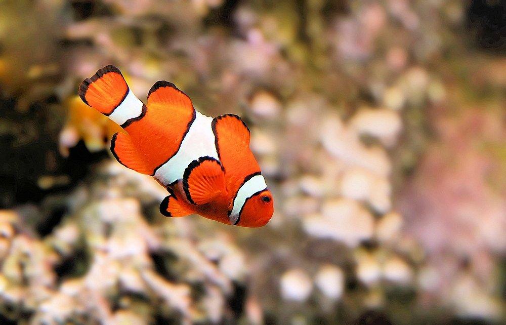 Nemo taucht ab