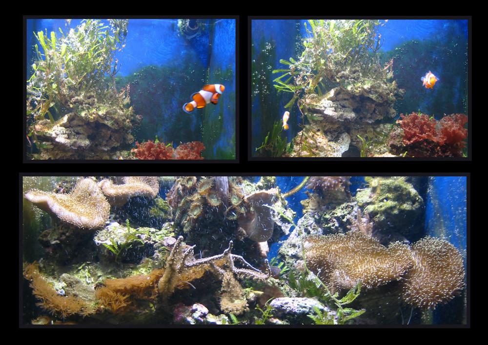 Nemo und Marlin