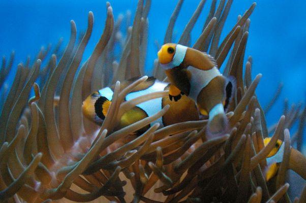 Nemo und sein Papa