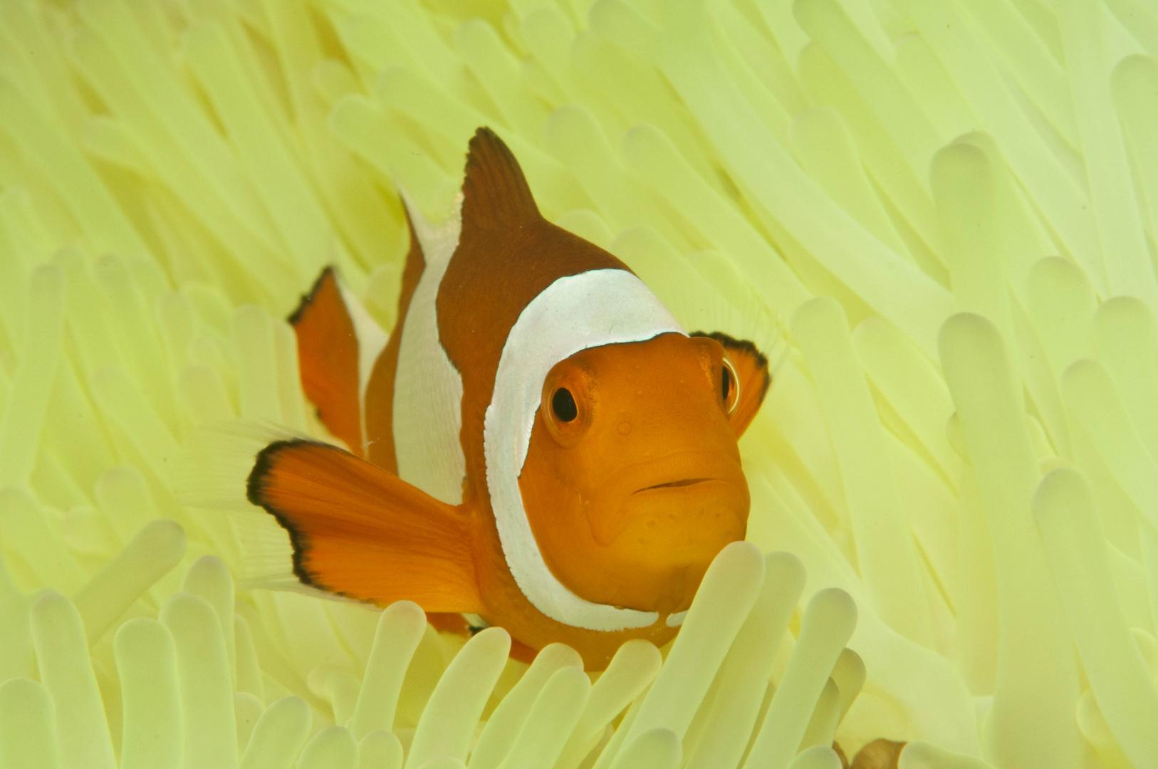 Nemo Unterwasser
