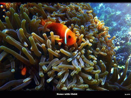 Nemo with Child