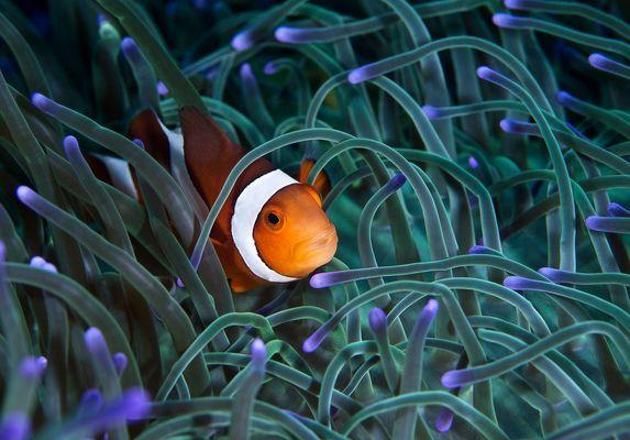 Nemo X