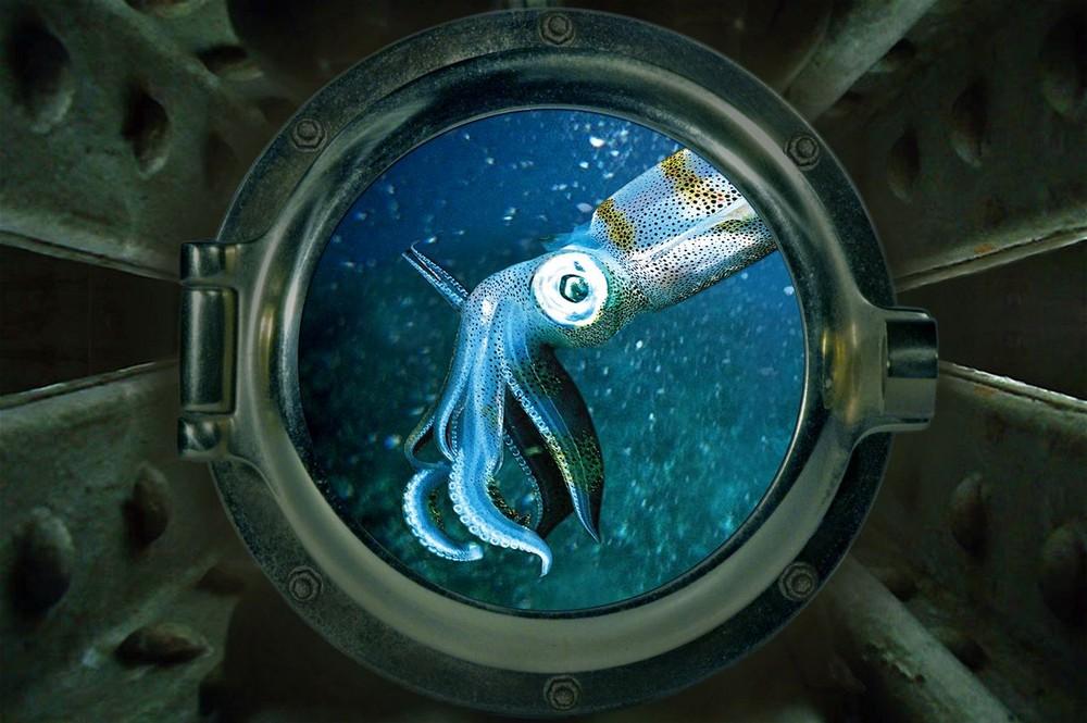 Nemo's Ausblick