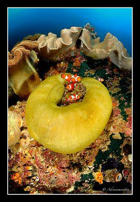 Nemo's family