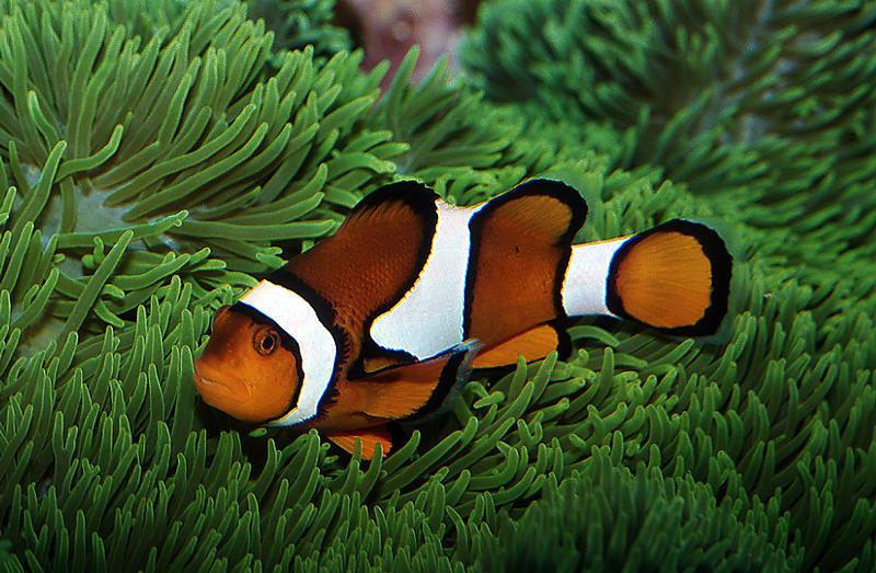 Nemo's Kumpel