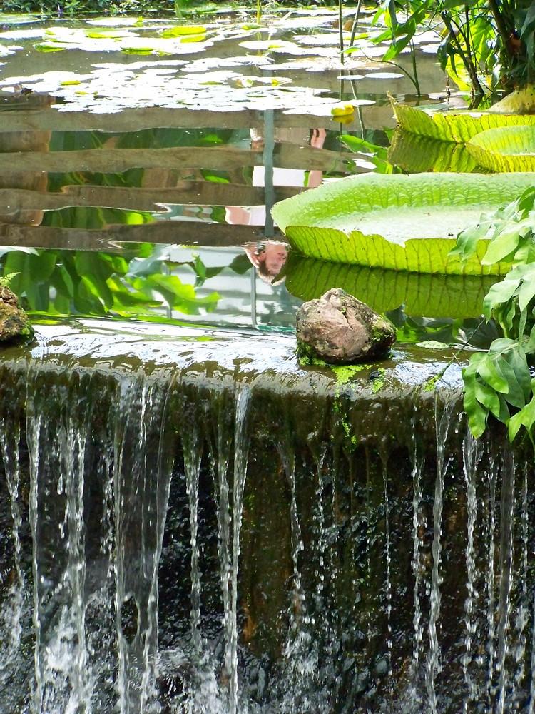 nénupahar et cascade