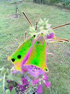 Neongrüner Fingerhut