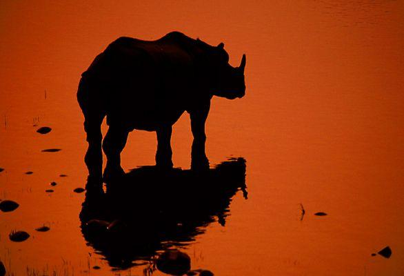 Nepal (5): Nashorn im Royal Chitwan National Park