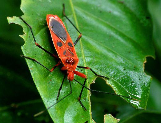 Nepal (6): Käfer im Royal Chitwan Nationalpark