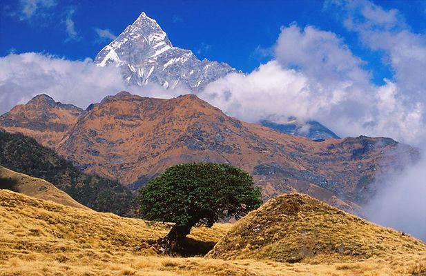 Nepal (8): Der letzte Baum