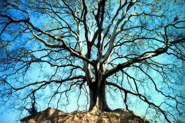 Nepali unter Bodhi-Baum