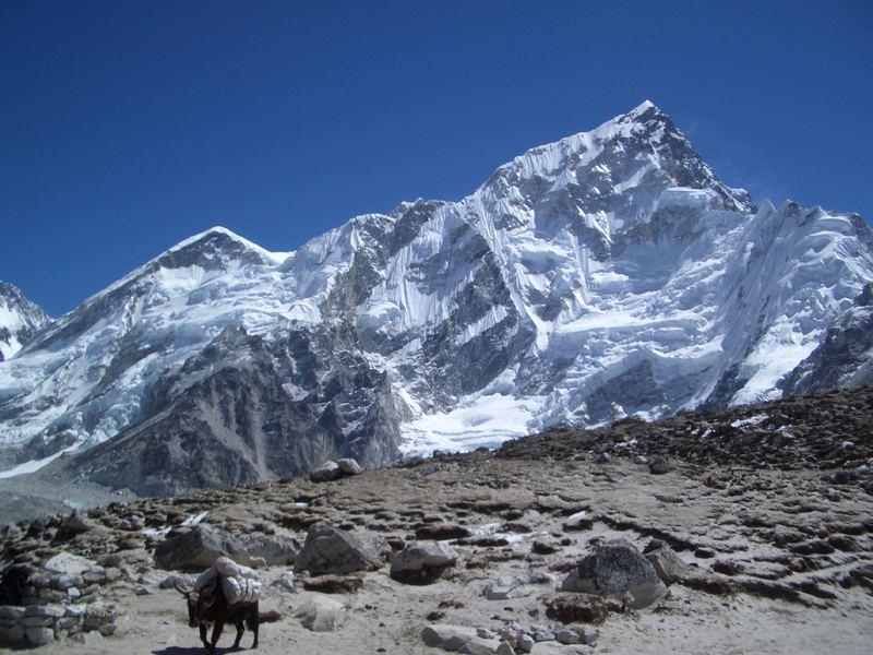 Nepals Eisriesen mit Yak