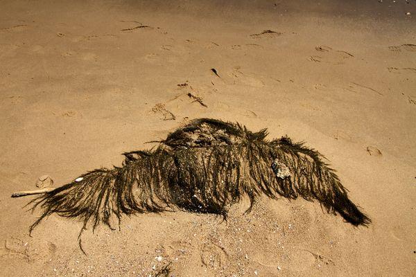 ...Neptuns Schnäuzer wurde angeschwemmt!
